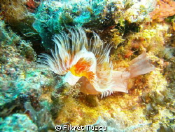 Sealife DC1400 Pro Duo - depth: 20-25m - little flash lig... by Fikret Tuzcu 